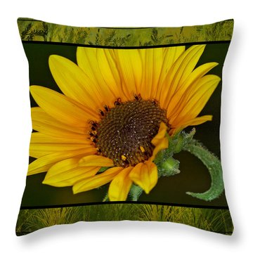Colorado Sunflower Throw Pillow