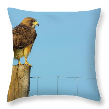 Throw Pillow featuring the photograph Colorado Swainson's Hawk Perched by John De Bord