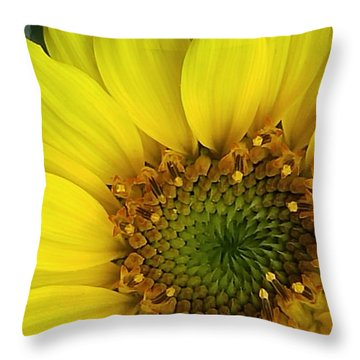Colorado Wildflower Sunshine  Throw Pillow