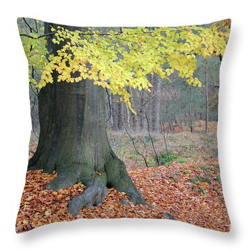 Colored Autumn Trees In Forest Throw Pillow
