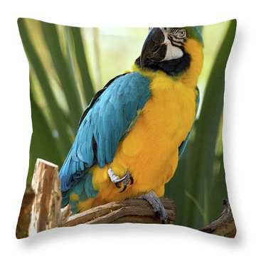 Colorful And Smart Throw Pillow