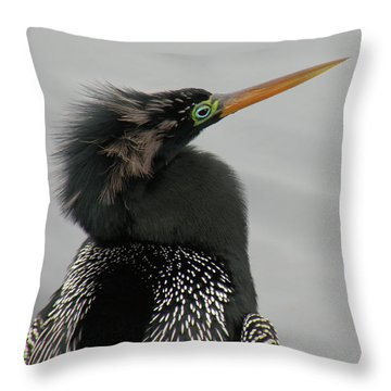 Colorful Anhinga Throw Pillow by Rosalie Scanlon