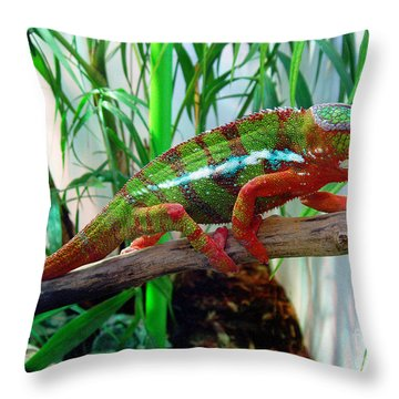 Colorful Chameleon Throw Pillow by Nancy Mueller
