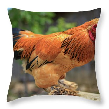 Colorful Chicken Throw Pillow