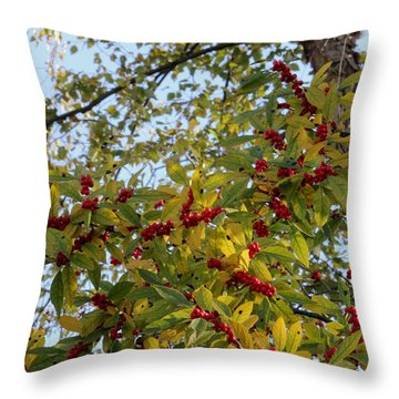 Colorful Contrasts Throw Pillow by Deborah  Crew-Johnson