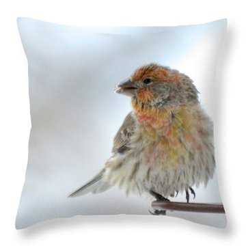 Colorful Finch Eating Breakfast Throw Pillow
