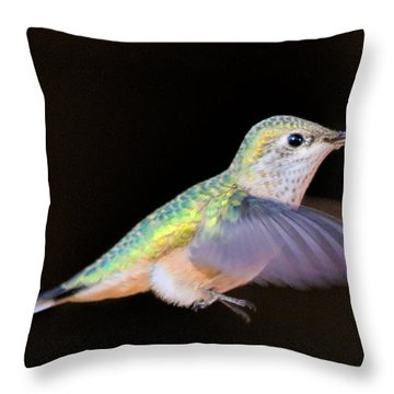 Colorful Hummingbird Throw Pillow