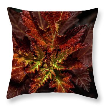 Throw Pillow featuring the photograph Colorful Leaves by Paul Freidlund