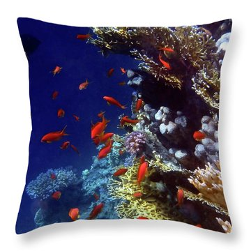 Colorful Lyretail Anthias Throw Pillow