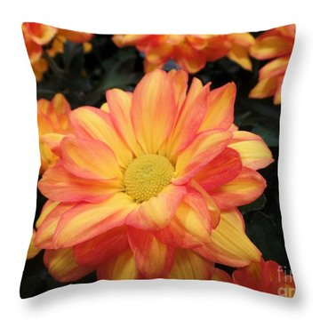 Throw Pillow featuring the photograph Colorful Mums by Ray Shrewsberry
