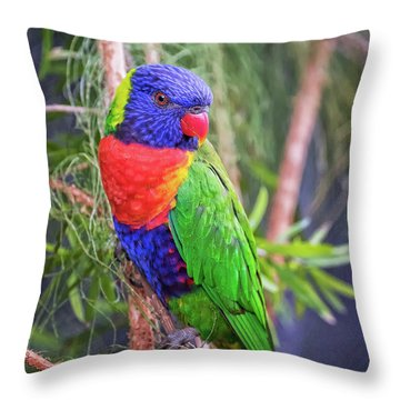Colorful Parakeet Throw Pillow by Stephanie Hayes