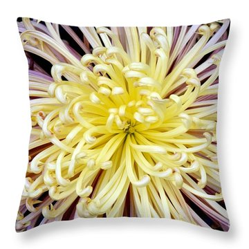 Colorful Spider Chrysanthemum   Throw Pillow