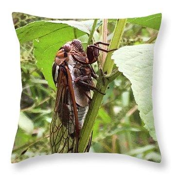 Colorful Summer Cicada Throw Pillow