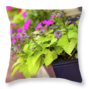 Colorful Summer Flowers In Window Box Throw Pillow