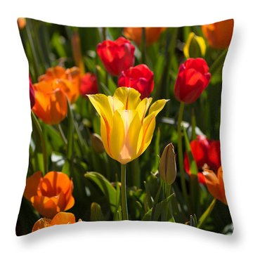Colorful Tulips Throw Pillow by John Roberts