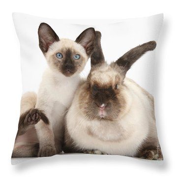 Colorpoint Rabbit And Siamese Kitten Throw Pillow by Mark Taylor
