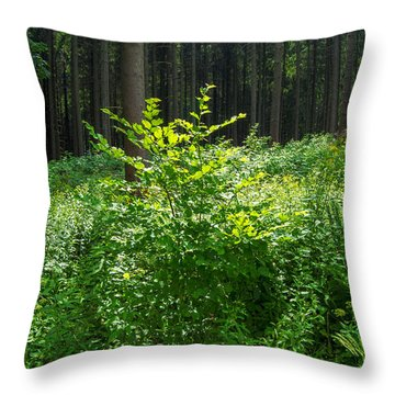 Colors Of A Forest In Vogelsberg Throw Pillow