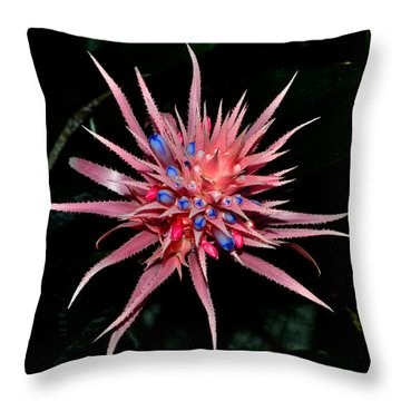 Throw Pillow featuring the photograph Colors Of Nature - Pink And Blue Bromelia by George Bostian