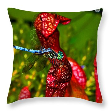 Throw Pillow featuring the photograph Colors Of Nature - Profile Of A Dragonfly 003 by George Bostian