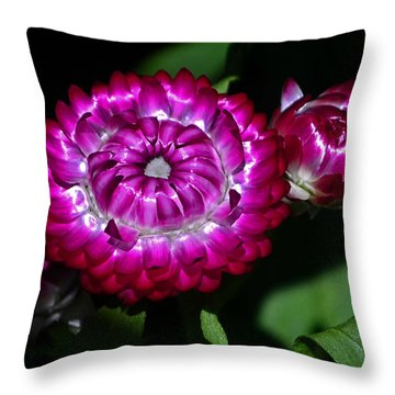 Throw Pillow featuring the photograph Colors Of Nature - Strawflower 005 by George Bostian