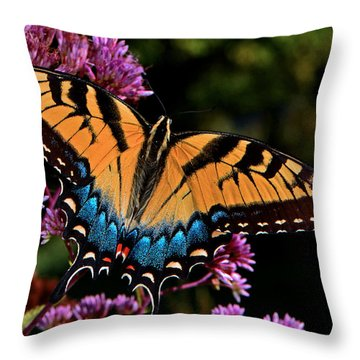 Colors Of Nature - Swallowtail Butterfly 004 Throw Pillow