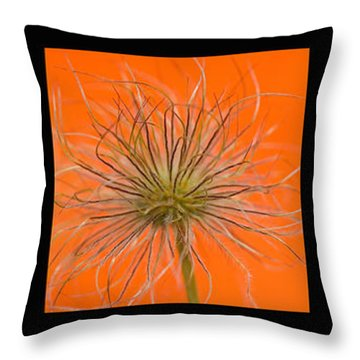 Colourful Crocus Triptych Throw Pillow by Lisa Knechtel