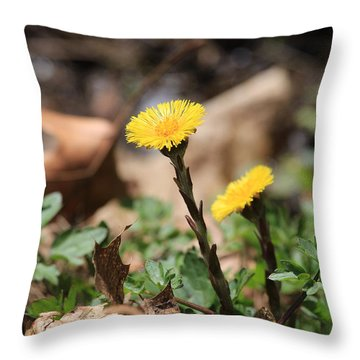 Throw Pillow featuring the photograph Coltsfoot by Rick Morgan
