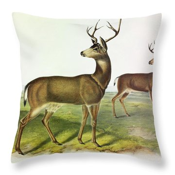 Columbian Black-tailed Deer Throw Pillow