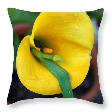 Come Out Come Out Throw Pillow