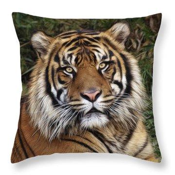 Come Pet Me Throw Pillow