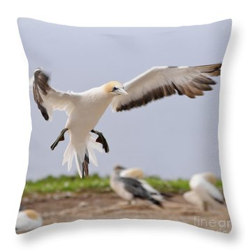 Throw Pillow featuring the photograph Coming In To Land by Werner Padarin