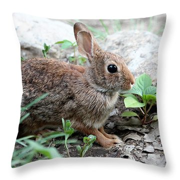 Throw Pillow featuring the photograph Coming Out Of Hiding by Sheila Brown