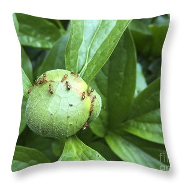 Coming Soon A Peony Near You Throw Pillow