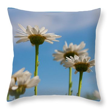 Coming Up Daisies Throw Pillow