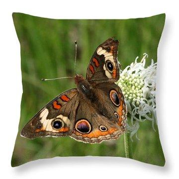 Common Buckeye Butterfly On Wildflower Throw Pillow by Sheila Brown