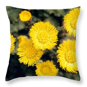 Common Coltsfoot  Throw Pillow