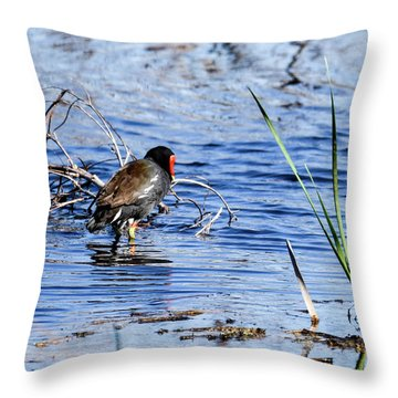Common Gallinule Throw Pillow