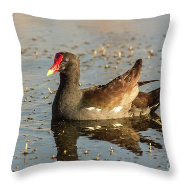 Common Gallinule Throw Pillow by Robert Frederick
