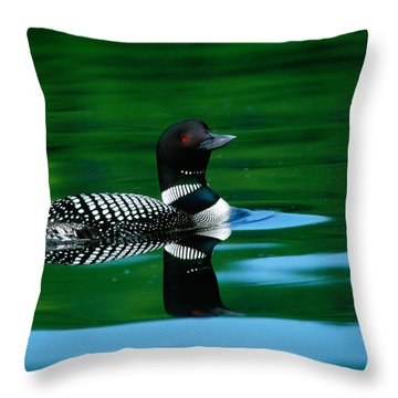 Common Loon In Water, Michigan, Usa Throw Pillow
