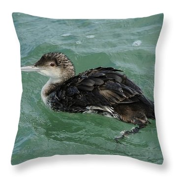 Throw Pillow featuring the photograph Common Loon In Winter by Bradford Martin