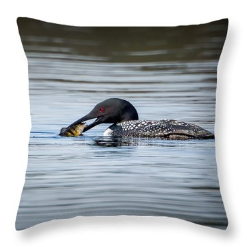 Common Loon Square Throw Pillow by Bill Wakeley
