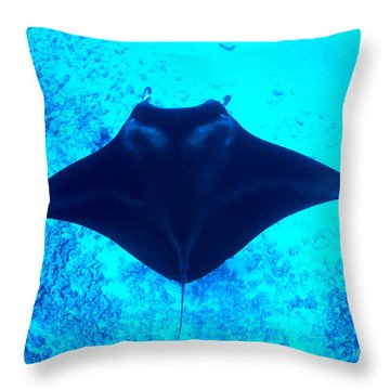 Common Manta Ray Throw Pillow by Dave Fleetham - Printscapes