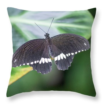 Common Mormon Pupilo Polytes Butterfly Settled On Leaf Throw Pillow