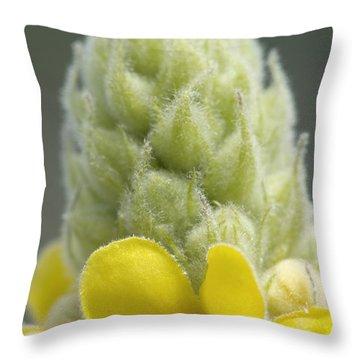 Common Mullein - New England Throw Pillow by Erin Paul Donovan