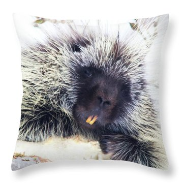 Common Porcupine Throw Pillow