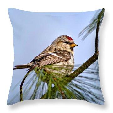 Common Redpoll Bird Throw Pillow by Christina Rollo
