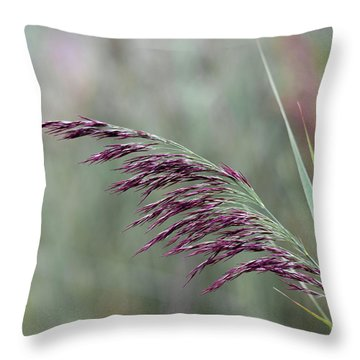 Throw Pillow featuring the photograph Common Reed Flower Stalk by Scott Lyons