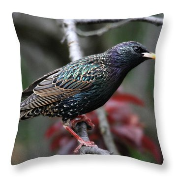 Common Starling Throw Pillow