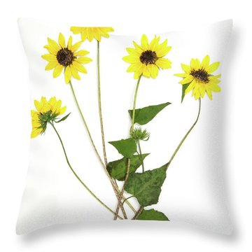 Common Sunflower Throw Pillow