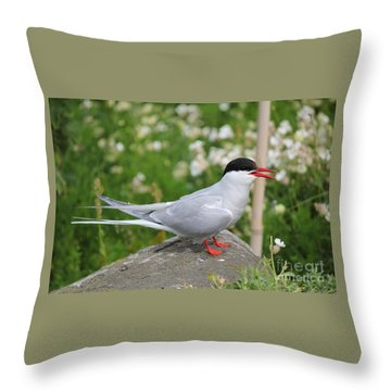 Common Tern Throw Pillow